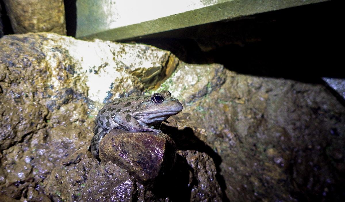 Prospection gouffre 1 grenouille