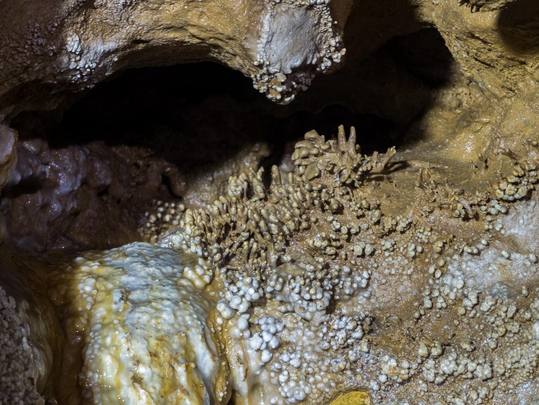 Concrétion dans la rivière souterraine de Champdeniers