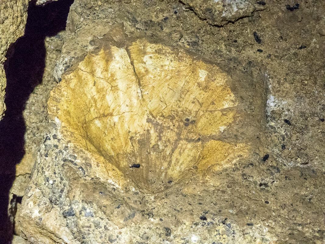 Rivière souterraine de Champdeniers - Fossile dans la salle du Grand Eboulis